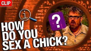 QI - Chick Sexing