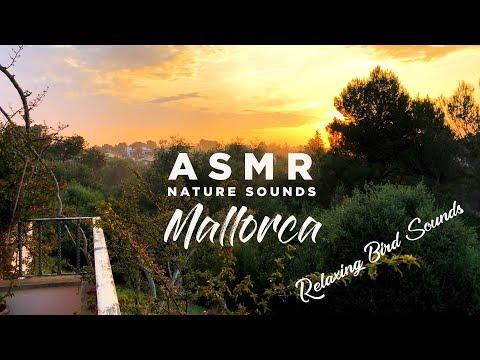 Mallorca Sunset Birds and Nature Sounds ASMR High Quality