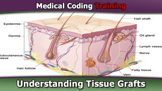 CPT Coding Guide — Understanding Tissue Grafts