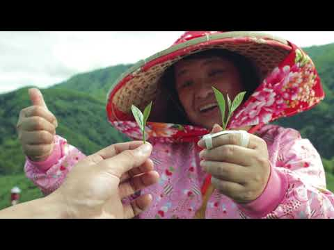 China Airlines | The Walshe Group - Airline GSA and tourist