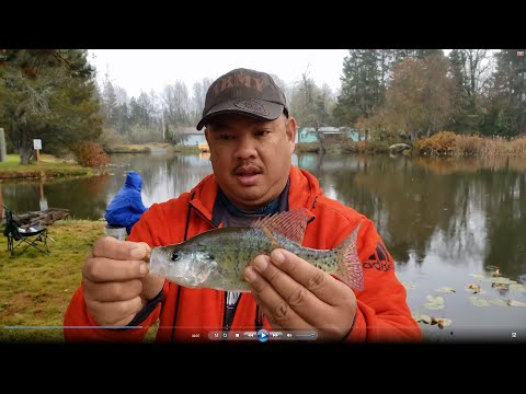Crappie  & Pan Fish Fishing In Silver Lake Washington