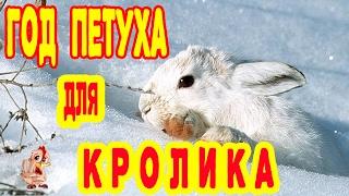 ГОД ПЕТУХА ДЛЯ КРОЛИКА. ГОРОСКОП 2017 КРОЛИК