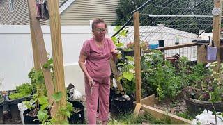 BTBF 456:  Nhà vắng người. 2 mẹ con tranh thủ tâm sự. Hái trụi vườn rau.Mẹ nói gì về con Rể