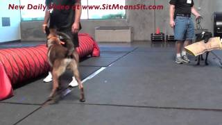 Practice Dog Obedience During Bitework (episode 2)