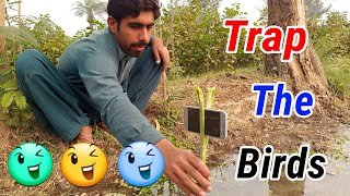 Trap & Record The Birds In Mobile Camera   Pakistan Village Life In Punjab