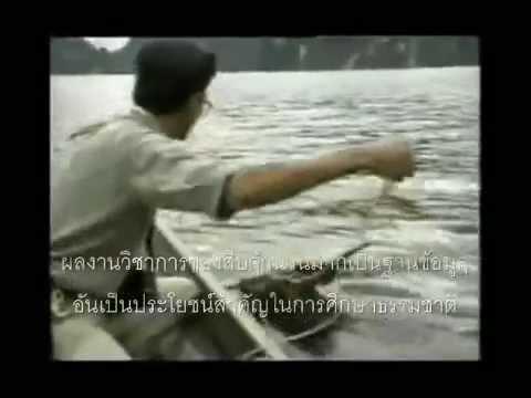 ฟังเพลง - สืบทอดเจตนา (สืบ นาคะเสถียร) คาราบาว - YouTube
