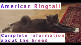 American Ringtail. Pros and Cons, Price, How to choose, Facts, Care, History