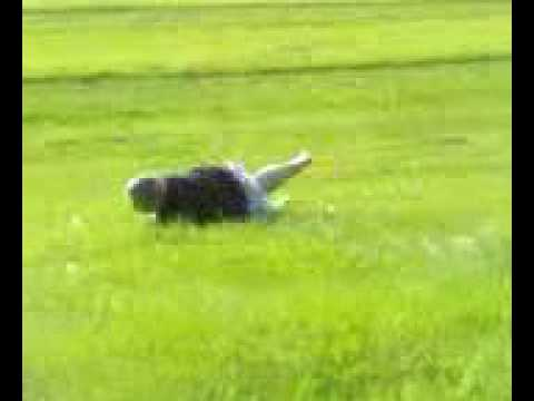 fat man rolling down a hill