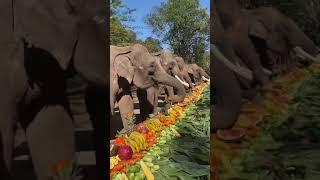 WOW como se nutren los elefantes