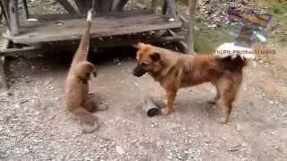 приколы кошки смешные топ видео 2014 животные кошки 26