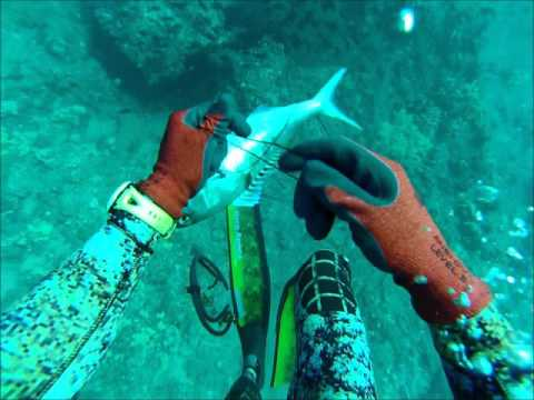 Oahu spearfishing #teamstrictly808