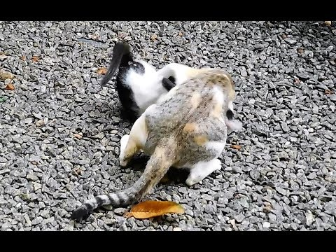 Mother cat play fighting harshly with kitten