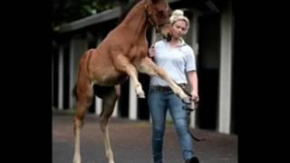 Конь за 3 миллиарда ?? | самый дорогой конь в мире | Horse Burg🐴