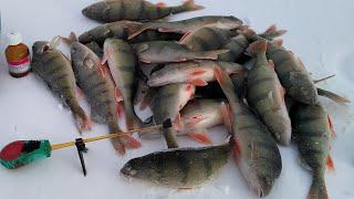 Ловим окуня на ГЛИЦЕРИН Подводные съемки Зимняя рыбалка 2021