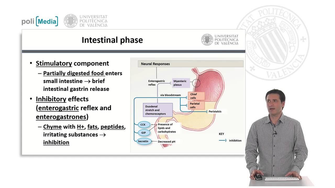 El estómago. Fisiología y regulación | 5/18 | UPV - YouTube