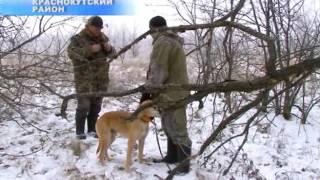 В Саратовской области прошли соревнования русских гончих