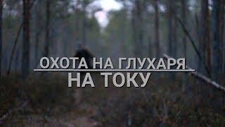 Охота на глухаря на току. Весна 2016, Тверская обл.