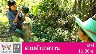 ตามอำเภอจาน : แกงเผือกกะเหรี่ยง หมู่บ้านสะพานลาว จังหวัดกาญจนบุรี 28 ม.ค. 60 (2/3)