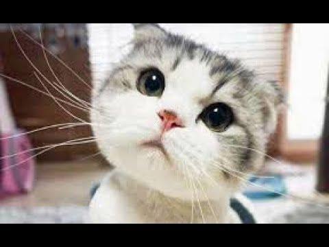 🐱Tik Tok Chó Mèo |  Hài Hước Boss Ngáo Ngơ Dễ Thương🐶