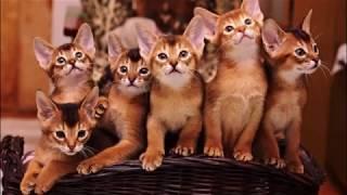 Самые популярные клички для котиков  Продолжение  Самый полный сборник кличек для котов