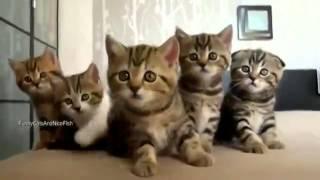 Funny kittens // Забавные котята