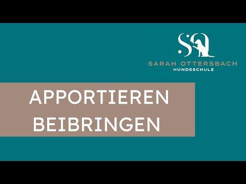Apportieren beibringen (Hundetraining TV)