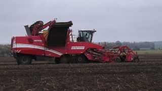 Potato Harvest in Western Ukraine