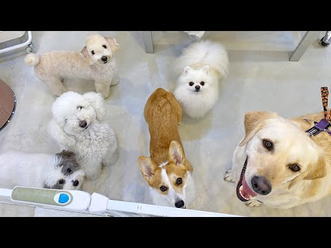 The day we went to see SHU AND TREE 🐶 from YouTube · Duration:  4 minutes 26 seconds
