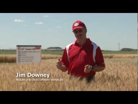 SeCan AC Vesper VB CWRS wheat