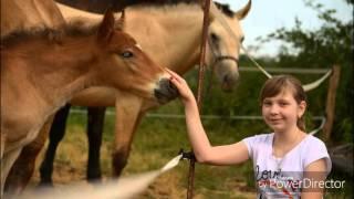 Konji & Jahanje & Jaz