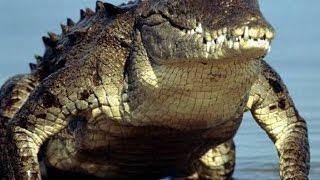 Крокодил l Рисование глазами победителя