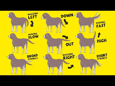 Interpret Dog Tail Wags: How to Understand Dog's Body Language