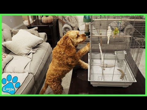 Cute Dog Reacts To New Pets I Logan The Adventure Dog