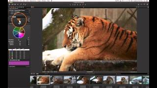 Introduction to Capture One Express 7 | Phase One