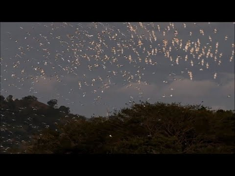 An island in El Salvador attracts birds and tourism