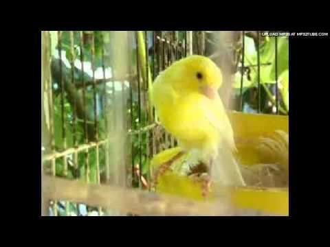 بی تو غروب - خواننده مجید رحمتی - شاعر فریبا شش بلوکی