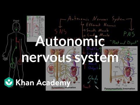 Autonomic nervous system   Organ Systems   MCAT   Khan Academy