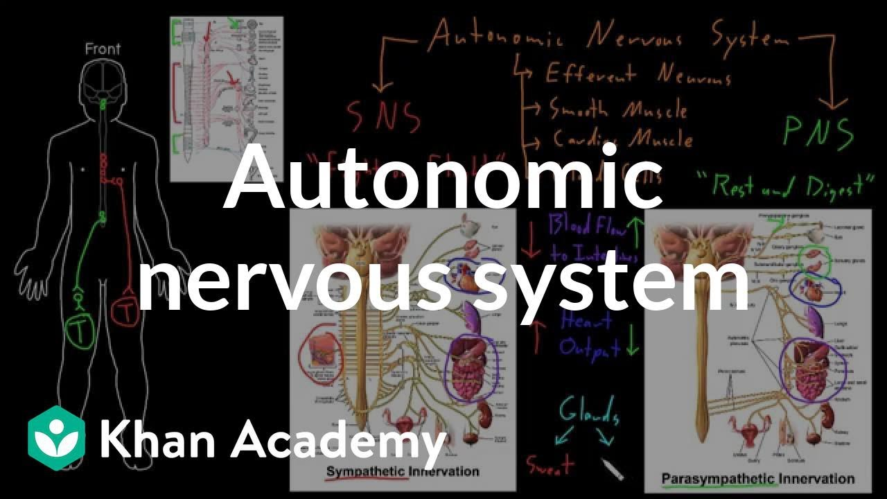 Autonomic nervous system (video) | Khan Academy