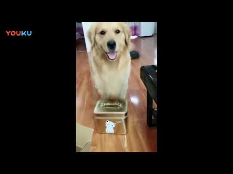 funny dog compilation 2018