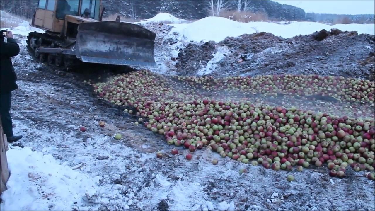 Производство натуральных яблочных соков прямого отжима компании .