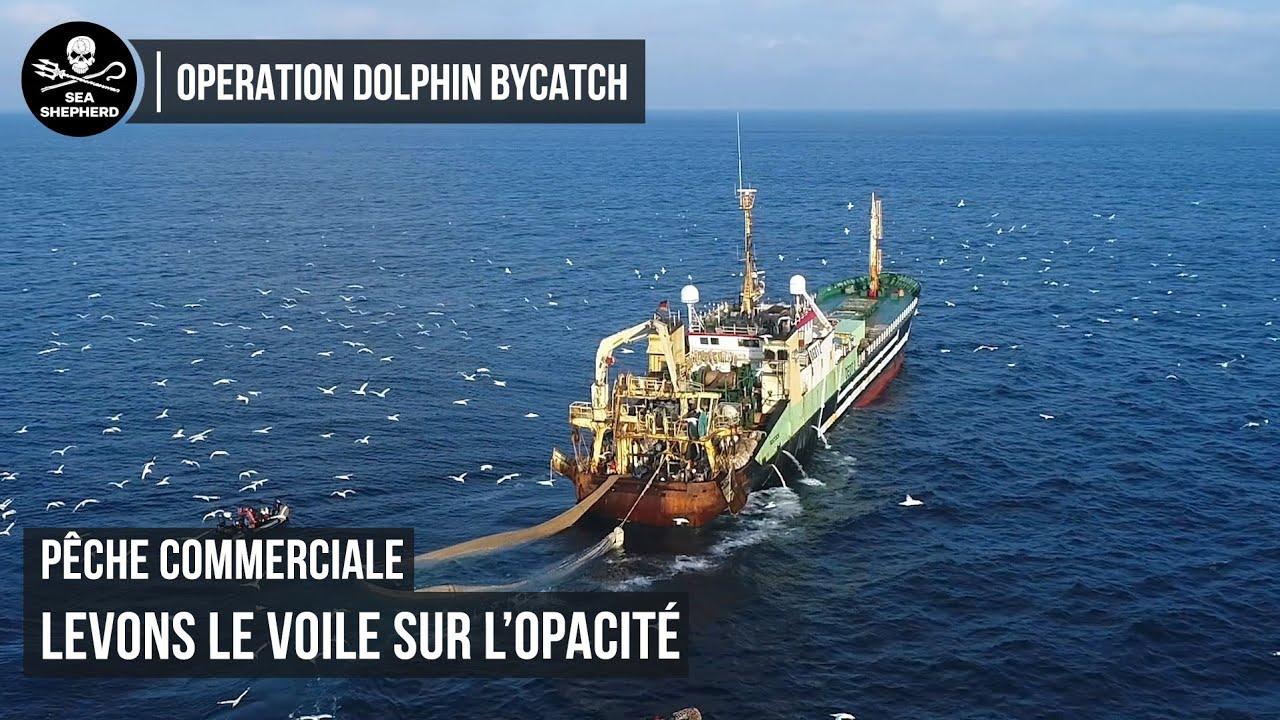 Levons le voile sur l'opacité de la pêche commerciale