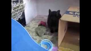 Adoptez la lapine Luna! - Adopt Luna the rabbit! Video 6