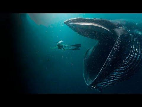 Kiedy Wieloryb Rzucił Się Na Kobietę, Ona Pomyślała że to Już Koniec