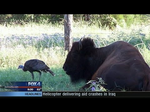 Craigslist Buffalo Buzzpls Com