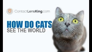 How do Cats See The World? How do Cats see Color and at Night?