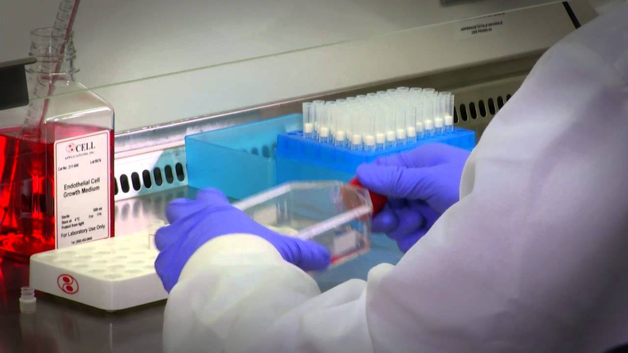 Primary Cell Culture: Protocols & Guidance