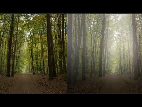 Foggy effect: Create Fog in a forest