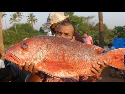 40kg's Big Grilled Fish | Big Size  Full Fish Cooking | street food