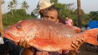 40kg's Big Grilled Fish | Big Size  Full Fish Cooking |