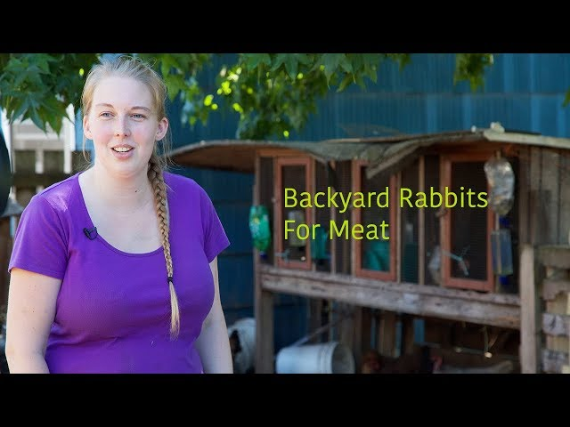 Backyard Rabbits for Meat